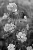 Sometimes flowers are gray... (PIXXELGAMES - Robert Krenker) Tags: newspaper news cafe kaffee vienna wien snapshot unknown candid portrait portret schwarzweiss blackandwhite blacknwhite bnw fujifilm fujinon filmsimulation lifestyle street streetstyle urban streetphotographer streetphotography biancoenero thoughts black white ritrato retrato dark unedited availablelight lady blossom grey gray shades bokeh flower flowers blackflower