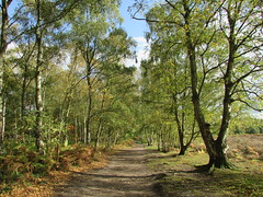 Highgate Common South Staffordshire... (Marie on Flickr) Tags: highgate common countryside beautiful