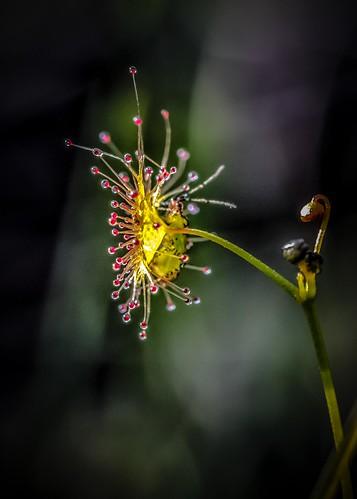 Macro Flowers-8