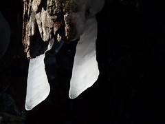 P1020471 (Maurizio Rosazza) Tags: ghiaccio inverno natura