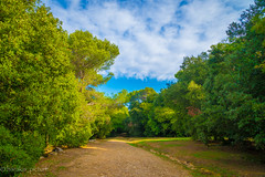 Parc naturel du Vinaigrier/french riviera forest (harakis picture) Tags: forest colors frenchriviera paca french france nature tree sony a7 ngc contactgroup onlythebestofflickr magicmomentsinyourlife natureselegantshots