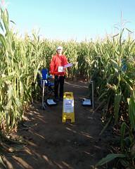 013 The Starter Awaits (saschmitz_earthlink_net) Tags: 2017 california temecula bighorsefeedandmercantile cornmaze orienteering laoc losangelesorienteeringclub corn