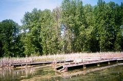 5.2017 LLWM W Branch Little Spokane Wildife Area  N. C41 CPS0015 (Jcicely) Tags: 2017 dock easternwashington kayaking loonlake loonlakewithmarvin may reeds trees water