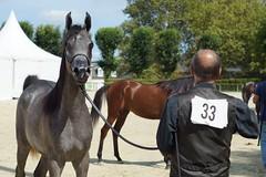 2/6 Show Pur-Sang Arabe (Sdine) Tags: arabianhorse horse horseshow pompadour