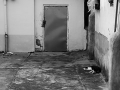 Daenung Mural Village (Miranda Ruiter) Tags: korea paju daenung muralvillage village photography streetphotography cat blackandwhite door