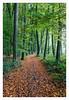 _forest_path (fot_oKraM) Tags: forest woods path weg waldweg laer natur nature tree trees laubbaum laub herbst autumn fall