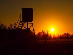 HOCHSTAND MIT SUNRISE PA159971 (hans 1960) Tags: autumn herbst golden oktober himmel sky hochstand jäger hunter nature natur wald feld bäume trees firtrees tannen silhouette sun sunrise sonne sonnenaufgang sunbeans sol soleil landschaft landscape nebel mist