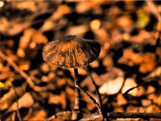 Autumn is mushroom season