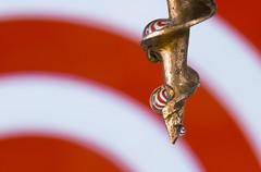 Vertigo (alideniese) Tags: macromondays spiral macro closeup corkscrew metal water waterdrops droplets refraction dizzy bokeh colourful red white alideniese 7dwf hanging shallowdepthoffield
