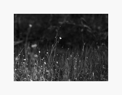 (bnishimoto) Tags: ranchosanantonio bayarea fujifilm fuji bw monochrome xpro2 23mm nature explore