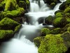 Waterfalls_267 (Ehab A.Saleh) Tags: absence adventure awe background drama dreams freedom harmony horizontal idyllic joncornforthimages loneliness mood nobody peaceful pristine quiet scenic silence spirit tranquil traveldestination usa afternoon canyon day environment green landscape nationalpark nature outdoors plant moss rocky temperaterainforest trees waterfall water olympic northamerica washington