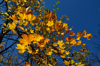 Golden October - another photo �