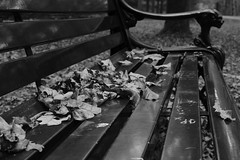 Les Feuilles Mortes (RW-V) Tags: canoneos70d canonefs35mmf28macroisstm palaisparchetloo palastparkhetloo palaceparkhetloo paleisparkhetloo banc bank bench feuilles leaves bladeren blätter nb sw zw bw monochrome automne herbst herfst autumn 100faves 120faves 150faves 175faves 200faves 225faves 250faves 275faves 300faves 325faves 350faves 375faves 2500views 400faves 425faves 3500views 450faves 475faves 500faves 5000views 525faves