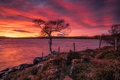 A Blustery Evening .. (Gordie Broon.) Tags: lochduntelchaig sunset lonetree blustery autumn scotland caledonia schottland dunlichity essich szkocja ecosse lac atardecer inverness fence lecoucherdusoleil zonsondergang scottishhighlands sonya7rmkii sonyzeiss1635f4lens bunachton invernessshire reservoir natural gordiebroonphotography lago see meer clouds sky heather paysage paisaje landschaft escocia alba sonnenuntergang thegreatglen torness geddies geotagged scozia scenery scenic sjo jezero