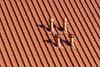 Four chimneys (Jan van der Wolf) Tags: map173201v roof rooftiles dak dakpannen schoorstenen monochrome monochroom four vier 4 chimneys shadows