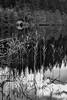 Loch Ard Boathouse (roseysnapper) Tags: bw lochard niksoftware nikkor2470f28 nikond810 silverefexpro20 blackandwhite circularpolarizer aberfoyle loch scotland trossachs boathouse calm grass lake landscape monochrome outdoor peaceful reflection serene water
