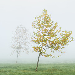 Little Shadow (Damian_Ward) Tags: ©damianward damianward trees fog mist buckinghamshire