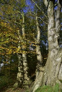 Herbstspaziergang; Aschberg, Naturpark Hüttener Berge (5)