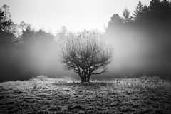 Knotty tree (Sebo23) Tags: tree baum knorrig knotty bw schwarzweis nature naturaufnahme moody canon6d canon10028l