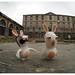 la face caché du décor, 2 lapins découvre le vrai visage de la friche industrielle cité du design  saint etienne.