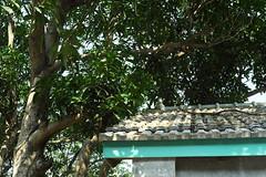 馬祖新村_9 (Taiwan's Riccardo) Tags: 2017 taiwan digital color dslr nikondf nikonlens seriese fixed 50mmf18 桃園縣 中壢 龍岡 馬祖新村