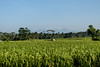 rice field (alain01789) Tags: bali indonesia rice field riziere landscape paysage velvia tegalallang