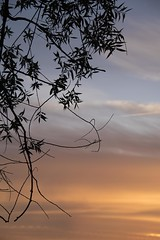 Le début ... * (Titole) Tags: branch branche sky sunrise titole nicolefaton clouds