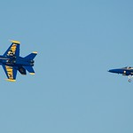 Blue Angel 5 rolls back over, looking somewhat cat-like DSC_1547 thumbnail