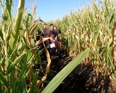 020 Going The Wrong Way (saschmitz_earthlink_net) Tags: 2017 california temecula bighorsefeedandmercantile cornmaze orienteering laoc losangelesorienteeringclub corn