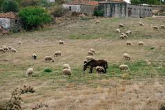 Penela da Beira (Viseu, Portugal) (Gail at Large | Image Legacy) Tags: 2017 peneladabeira portugal gailatlargecom