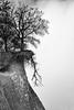 Dangerous coast (unukorno) Tags: sassnitz mecklenburgvorpommern deutschland rügen ostsee balticsea bw sw monochrome blackwhite danger gefahr absturz trees bäume coast küste kreideküste chalkcliffs