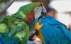 With a little help from my friend (SDRPhoto321 Back from the field) Tags: animal botanical bird canon color colorful dof depthoffield eos expression eye elevated eyes exposure exit florida feathers green gold haven inspiring