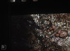 Tinodes and agapteris caddis. Nant Llanerch (Mary Gillham Archive Project) Tags: 21121 caddisfly invertebrate nantllanerch so0821 trichoptera wales talybontonusk unitedkingdom gb