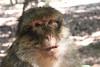 2013-07-21 14-43-18 Montagne des singes.jpg (beckendorf.marc) Tags: fra france alsacechampagneardennelorraine kintzheim alsacechampagneardennelorrain