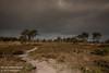 Kalmthoutse Heide [8] (Werner Wattenbergh) Tags: kalmthout antwerpen belgie bel