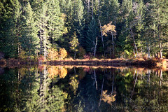 ROSH2799-Edit.jpg (Roshine Photography) Tags: colours loonlake fallcolours alberniclayoquotf britishcolumbia canada ca forest tree water grass reflections wood
