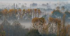 Watercolor (Jean-Luc Peluchon) Tags: fz1000 lumix couleur brume brouillard automne paysage arbre matin tableau rural campagne
