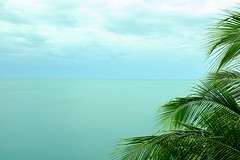 Thailand, Koh Samui 2017 (sureShut) Tags: meer ozean himmel sky wasser water tropisch tropical palmtree palme türkish kohsamui thailand türkis