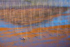 Stick in the Mud (Hilton Chen) Tags: perpendicular autumn beach fujianprovince scale geometricpattern landscape aquaculture xiapu person seaweedfarming mudflats bamboopoles village china lowtide ningdeshi fujiansheng cn