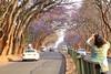 IMG_0078 (Couchabenteurer) Tags: simbabwe jacarandatree harare street