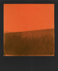Countryside dyed in orange (ale2000) Tags: polaroid impossible analog analogue instant instantphotography sx70 600 duochrome orangeandblack arancio arancione black nero square frame blackframe natura campo field nature country countryside tuscany toscana