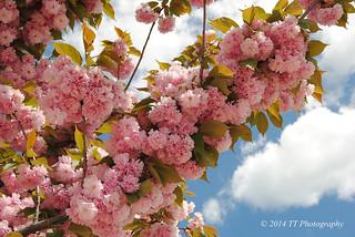 Rama de flores rosas