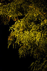 Baum bei Nacht (_IMG3128) (Bildredaktion Wien) Tags: nacht night vienna wien austria österreich herbst autumn finster finsternis nowebsite baum tree lichtschein 1220 donaustadt