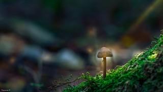 Tiny  treasures in flora