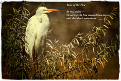 Great Egret ~ Year of the Fire (Johnrw1491) Tags: poetry poem essay haiku zen egrets birds symbols memories fire textures digital fine art bird photography