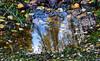 Autumn in water (CB-Photos) Tags: end summer puddle herbst mirrow spiegel wasser blätter gras autumn spiegelung sony a77m2 alpha nature sky tree wow fokus overhead überkopf