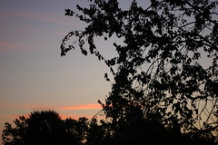 Trees At Dawn. (dccradio) Tags: lumberton nc northcarolina robesoncounty outside outdoors nature sky morning dawn earlymorning natural tree trees foliage autumn earlyautumn goodmorning pinkclouds silhouette leaves leaf branches treebranches treelimbs scenic landscape