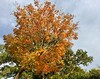 Foliage at Hains (Mr.TinDC) Tags: dc washingtondc hainspoint tree foliage leaves fall autumn