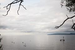 Quiet evening (BlossomField) Tags: lake water jönköping schweden swe