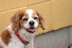 Cute Puppy, St. James Farm. (EOS) (Mega-Magpie) Tags: canon eos 60d outdoors cut puppy st james farm warrenville il illinois usa america dog pet